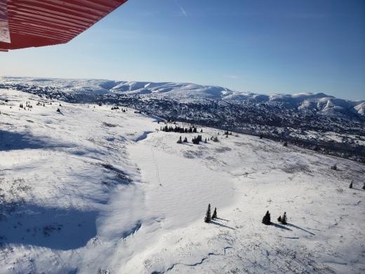Tiny snow shoers below